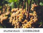 grapes of vaduz   Shutterstock . vector #1338862868