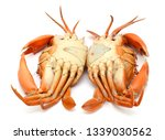 cooked crab isolated on white... | Shutterstock . vector #1339030562