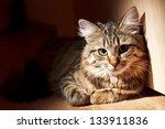nice cat | Shutterstock . vector #133911836