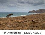 Coastline Of A Soil Of A Brigh...
