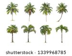 coconut and palm trees isolated ... | Shutterstock . vector #1339968785