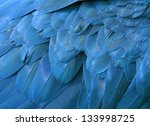 Beautiful Blue Macaw Feathers...