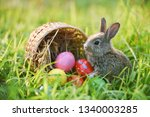 Easter Bunny And Easter Eggs On ...