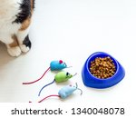 Blue plate with dry cat food...