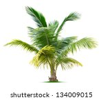 young palm tree isolated on...   Shutterstock . vector #134009015