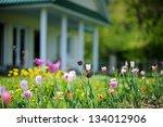 Beautiful Colorful Tulips In...