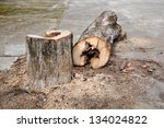 trees to be cut down the middle ... | Shutterstock . vector #134024822