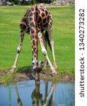the giraffe  giraffa... | Shutterstock . vector #1340273282