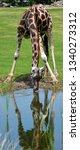 the giraffe  giraffa... | Shutterstock . vector #1340273312