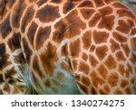 skin of giraffe  giraffa... | Shutterstock . vector #1340274275