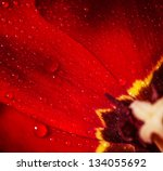 Closeup Photo Of Red Tulip Cor...