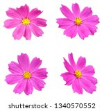 a pink cosmos flower isolated... | Shutterstock . vector #1340570552