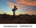 Silhouette Of Joshua Tree At...