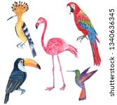 Set Of Tropical Wild Birds....