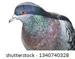 Rocky Iridescent Dove With An...
