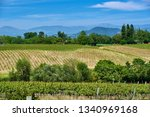 vineyards landscape in... | Shutterstock . vector #1340969168