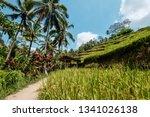 tegalalang rice terrace in bali ... | Shutterstock . vector #1341026138