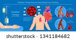 chelation therapy lead mercury... | Shutterstock .eps vector #1341184682