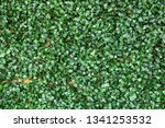 green leaf artificial on wall... | Shutterstock . vector #1341253532