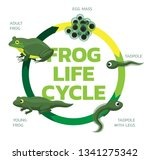 frog life cycle cartoon cute... | Shutterstock .eps vector #1341275342