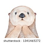 Cute Fluffy Little Sea Otter ...