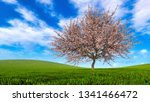 Spring Landscape With Single...