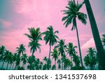 coconut palm trees   tropical... | Shutterstock . vector #1341537698