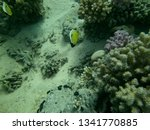 the underwater world of the red ...   Shutterstock . vector #1341770885