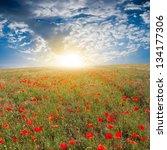 red poppy field ar the sunrise   Shutterstock . vector #134177306