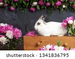 white rabbit with spring... | Shutterstock . vector #1341836795