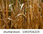 macro of withered reed | Shutterstock . vector #1341926225