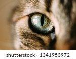 Macro View Of Cats Eye. Close...