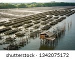 oyster farms in the sea at the... | Shutterstock . vector #1342075172