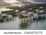 oyster farms in the sea at the... | Shutterstock . vector #1342075175