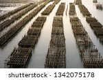oyster farms in the sea at the... | Shutterstock . vector #1342075178