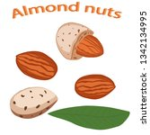 almond nut close up. vector... | Shutterstock .eps vector #1342134995