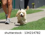 Stock photo walking the dog on lead 134214782