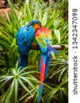 macaw blue and yellow macaw....   Shutterstock . vector #1342347098