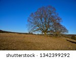 trees in hilly heather land at...   Shutterstock . vector #1342399292