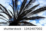 cloudscape with palm tree ...   Shutterstock . vector #1342407002