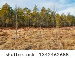 lanscape in finland natural area   Shutterstock . vector #1342462688