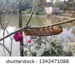 nature's wallpaper download    Shutterstock . vector #1342471088
