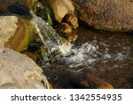 stones in stream with smooth...   Shutterstock . vector #1342554935