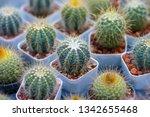 green castus in garden  | Shutterstock . vector #1342655468
