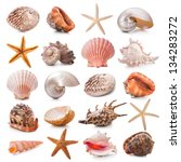 Sea Shells Collection Isolated...