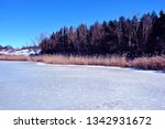 pines and willows on the hills  ... | Shutterstock . vector #1342931672