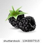 sweet blackberries on the... | Shutterstock .eps vector #1343007515