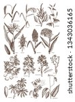 hand drawn agricultural plants...   Shutterstock .eps vector #1343036165