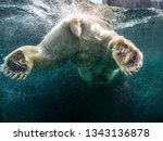 Action Closeup Of Polar Bear...