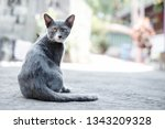 stray grey cat sit on the... | Shutterstock . vector #1343209328